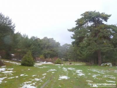Picos Urbión-Laguna Negra Soria;hayedo de ciñera parque natural izki hayedo de montejo rutas carac